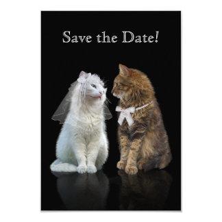 Cat online dating