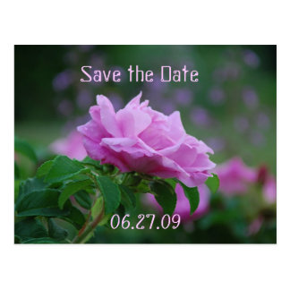 Save the Date Pink Rose Postcard