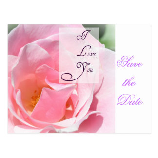 Save the Date Post Card Pretty Pink Rose