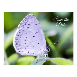 Save the Date Spring Azure Butterfly Postcard