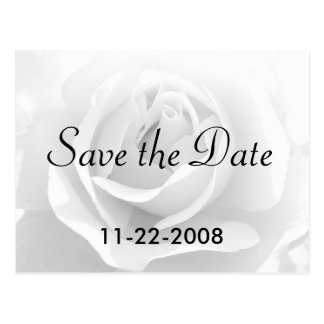 Save the Date White Rose Postcard