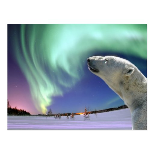 Save the Endangered Polar Bears for Christmas Post Card