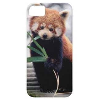 Save the Red Panda iPhone 5/5S Case