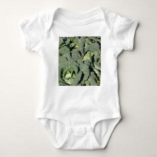 Savoy cabbage plants in a field. baby bodysuit
