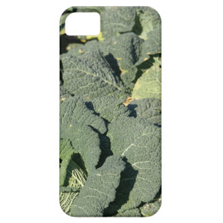 Savoy cabbage plants in a field. case for the iPhone 5