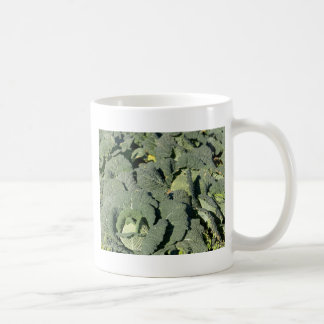 Savoy cabbage plants in a field. coffee mug