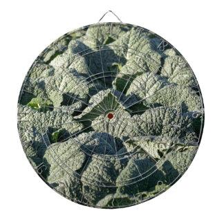 Savoy cabbage plants in a field. dartboard