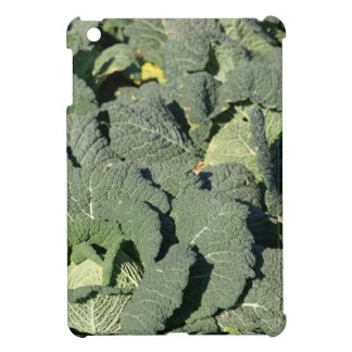 Savoy cabbage plants in a field. iPad mini case