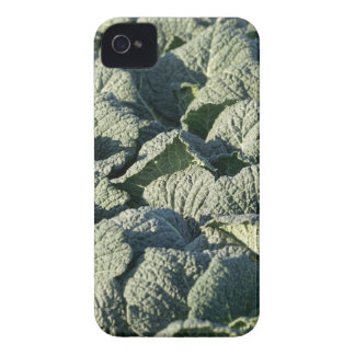 Savoy cabbage plants in a field. iPhone 4 Case-Mate case