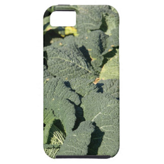 Savoy cabbage plants in a field. iPhone 5 case