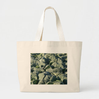 Savoy cabbage plants in a field. large tote bag