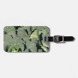 Savoy cabbage plants in a field. luggage tag