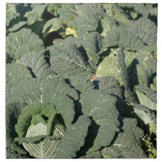 Savoy cabbage plants in a field. napkin