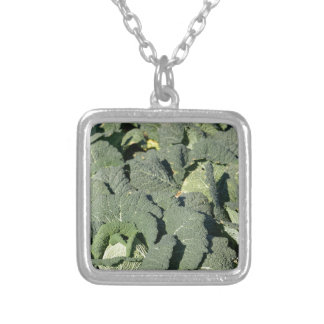 Savoy cabbage plants in a field. silver plated necklace