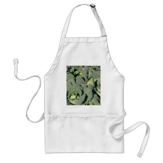 Savoy cabbage plants in a field. standard apron