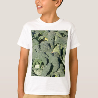 Savoy cabbage plants in a field. T-Shirt