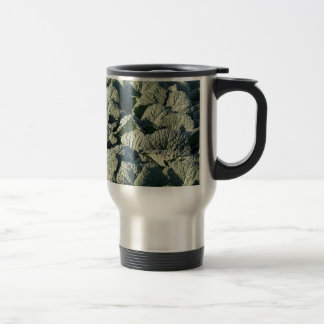 Savoy cabbage plants in a field. travel mug