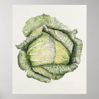 Savoy Cabbage Poster
