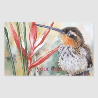 Saw-billed Hermit Hummingbird