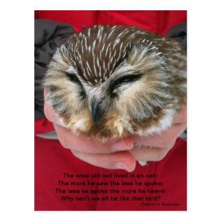 Saw-whet Owl Poem Postcard