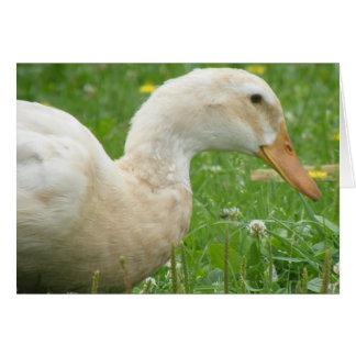 Saxony Duck Card