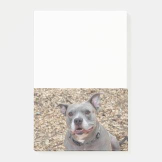 Say CHEESE Smiling Pitbull Notes