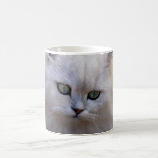 Say what kitten mug