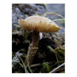 Scaley Mushroom on Unalaska Island Postcard