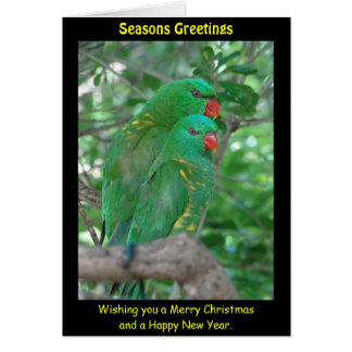 Scaly Breasted Lorikeet Xmas Card