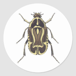 Scarab Beetle Classic Round Sticker