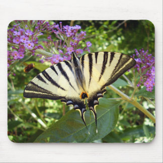 Scarce Swallowtail Butterfly Mouse Mat