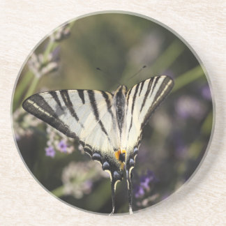 Scarce Swallowtail (Iphiclides podalirius) Beverage Coaster