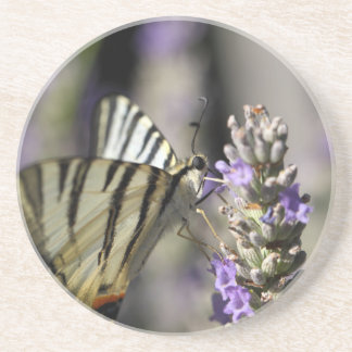 Scarce Swallowtail (Iphiclides podalirius) Drink Coaster