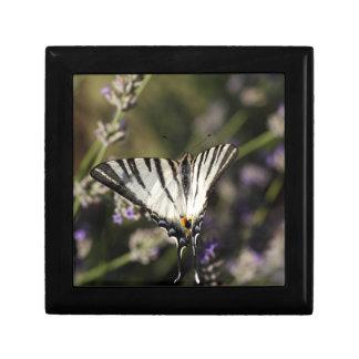 Scarce Swallowtail (Iphiclides podalirius) Keepsake Box