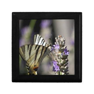 Scarce Swallowtail (Iphiclides podalirius) Trinket Boxes