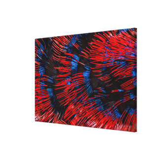 Scarlet-Chested Sunbird Feathers Canvas Print