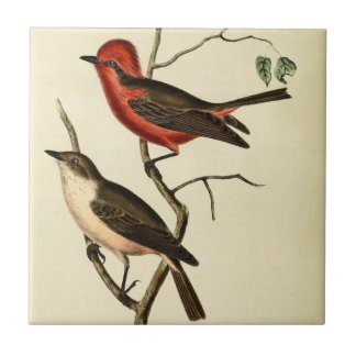 Scarlet Crowned Flycatcher Tile
