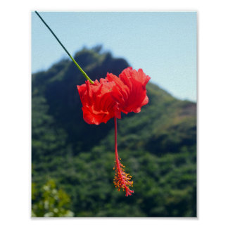 Scarlet Hibiscus in Hawaii Poster