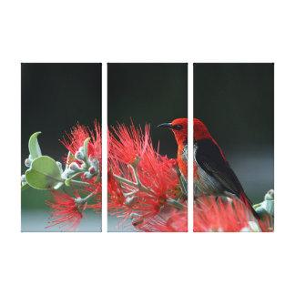 Scarlet honeyeater canvas print