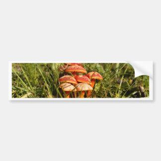 Scarlet hood fungi, Hygrocybe coccinea Bumper Sticker