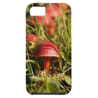 Scarlet hood fungi, Hygrocybe coccinea Case For The iPhone 5