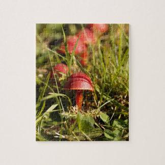 Scarlet hood fungi, Hygrocybe coccinea Jigsaw Puzzle
