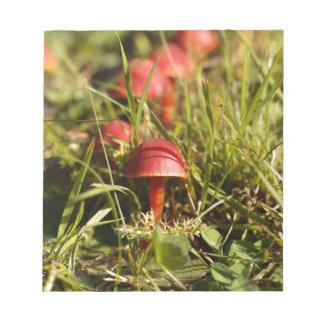 Scarlet hood fungi, Hygrocybe coccinea Notepad