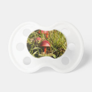 Scarlet hood fungi, Hygrocybe coccinea Pacifier