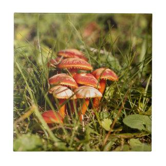 Scarlet hood fungi, Hygrocybe coccinea Tile