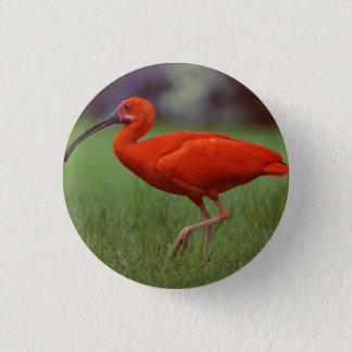 Scarlet ibis 1 inch round button