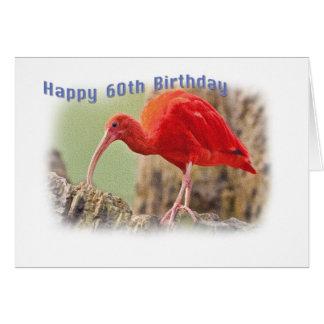 Scarlet Ibis Bird 60th Birthday Card