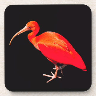 Scarlet Ibis Coaster