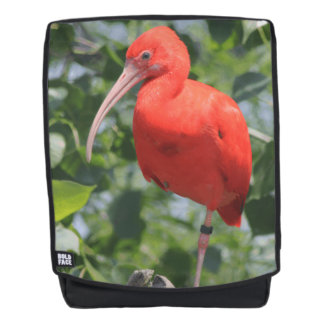 Scarlet Ibis Exotic Bird Boldface Backpack + Face