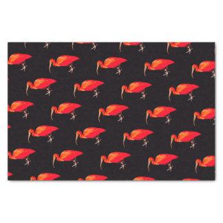 Scarlet Ibis Tissue Paper